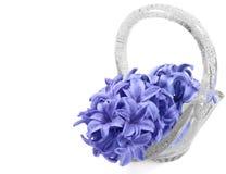 Hyacint in de vaas Royalty-vrije Stock Foto