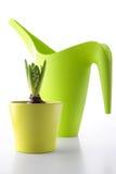 Hyacint in een groene pot Royalty-vrije Stock Afbeelding