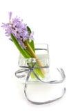 Hyacint in glasvaas Royalty-vrije Stock Afbeeldingen