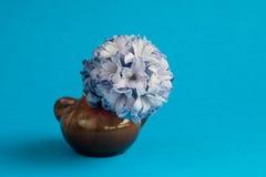 Hyacint i vas på blå bakgrund Selektivt fokusera Arkivbild