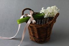 Hyacint met mand royalty-vrije stock foto