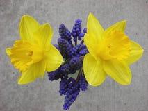 Hyacint och jonkillar Royaltyfri Fotografi