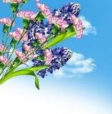 Hyacintbloemen Stock Fotografie