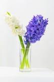 Hyacintbloemen op de lente Stock Afbeeldingen