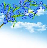 Hyacintblommor Fotografering för Bildbyråer