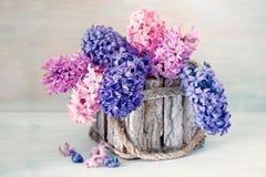 Hyacinten blommar i en korg Royaltyfri Fotografi