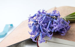 Hyacinten blommar på en öppen tappningbok Royaltyfri Fotografi