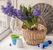 Hyacinten in een mand in het venster Stock Fotografie