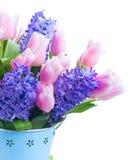 Hyacinten en tulpen Royalty-vrije Stock Foto's