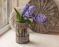 Hyacintenbloei in het venster Stock Afbeelding