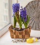 Hyacinter i korg och easter ägg Fotografering för Bildbyråer