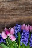 Hyacinter och tulpan Arkivfoton