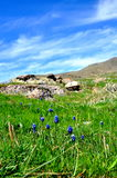 Hyacintfält Royaltyfri Foto