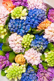 Hyacinth Royalty Free Stock Photos