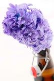 Hyacinth Royalty Free Stock Photos