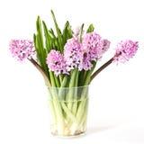 Hyacinth Imagens de Stock Royalty Free