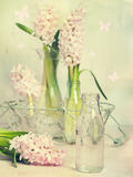 Hyacinth Arrangement Royalty Free Stock Images