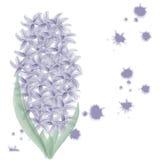 Hyacinth background. Illustration of a blue hyacinth Royalty Free Stock Photos
