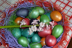 Hyacinth in basket with eggs. Easter Day is a special day. Women carefully arranges specific preparations. No shortage of colorful eggs, roast lamb, cakes stock photography