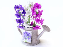 Hyacinth Bouquet in a Watering-can Royalty Free Stock Photo