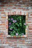 Hyacinth bush in the brick wall. Window with flowers Royalty Free Stock Photo