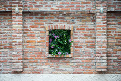 Hyacinth bush in the brick wall. Window with flowers Royalty Free Stock Photography
