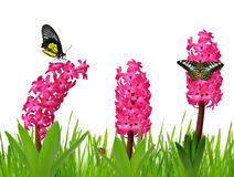Hyacinth with butterflies Stock Image