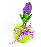 Hyacinth decoration Royalty Free Stock Images