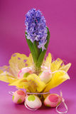Hyacinth for easter Royalty Free Stock Photo