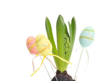 Hyacinth with Easter eggs Royalty Free Stock Photo