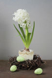 Hyacinth with eggs Royalty Free Stock Images