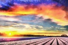 Hyacinth field at sunset. Netherlands Beauty world. Hyacinth field at sunset. Netherlands. Beauty world Holland Royalty Free Stock Photos