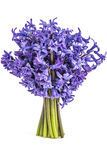 Hyacinth flower bouquet stock image