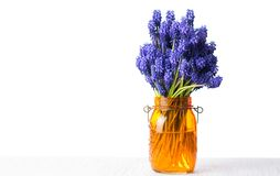 Hyacinth flower bouquet in a vase. Isolated Stock Photo