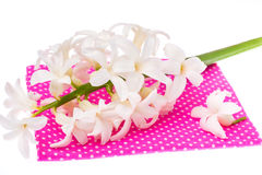 Hyacinth flower on colored fabric Stock Image
