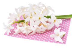 Hyacinth flower on colored fabric Stock Photos