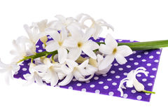 Hyacinth flower on colored fabric Stock Images