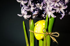Hyacinth flower and easter egg Royalty Free Stock Photo
