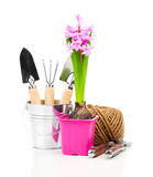 Hyacinth flower with garden tools for seedlings Royalty Free Stock Photos