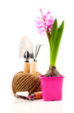 Hyacinth flower with garden tools for seedlings Stock Photography