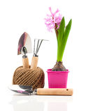 Hyacinth flower with garden tools for seedlings Royalty Free Stock Photography