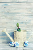 Hyacinth flower photo Stock Image