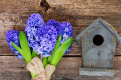 Hyacinth flowers  and birdcage Stock Photo