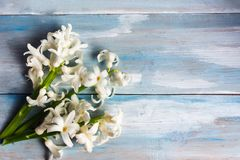 Hyacinth flowers bouquet on a wooden table. Top view white copy space spring color springtime vibrant small beautiful decoration decorative present season stock photo
