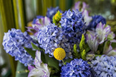Hyacinth. Flowers decoration in interior Royalty Free Stock Photo