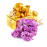 Hyacinth flowers and gift box Stock Images