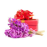 Hyacinth flowers and gift box Royalty Free Stock Photos