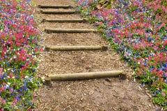 Hyacinth flowers in Keukenhof Stock Images