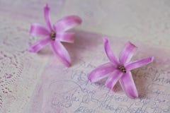 Hyacinth Flowers On Texture rosa immagini stock libere da diritti