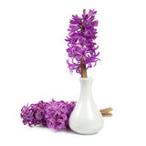 Hyacinth flowers in a white vase Stock Photo